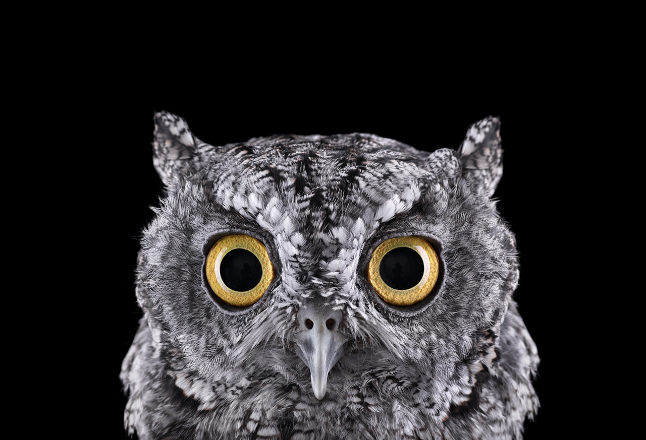 the-most-mysterious-birds-in-the-portraits-brad-wilson-14