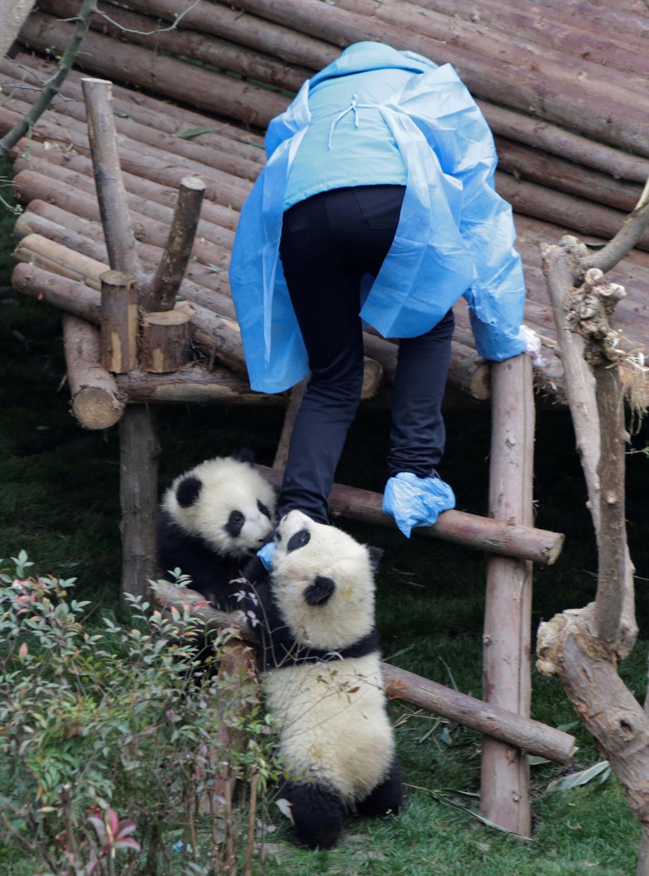 Панда и ребенок фото