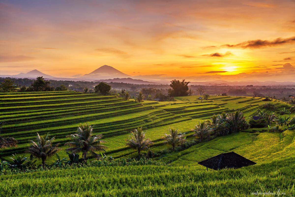 Изумруды рисовых полей