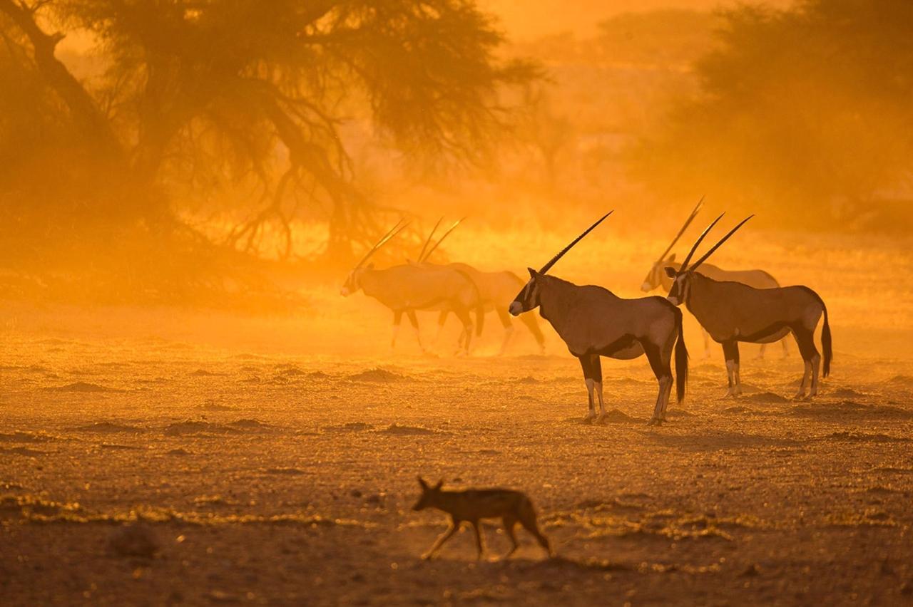 Неповторимая Африка Кейта Коннели