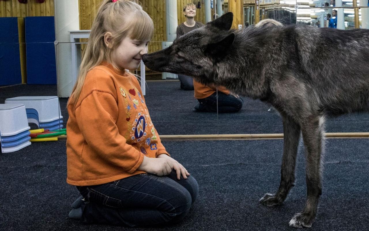 Самарская «Красная шапочка»: семилетняя Ярослава живет в квартире вместе с волком