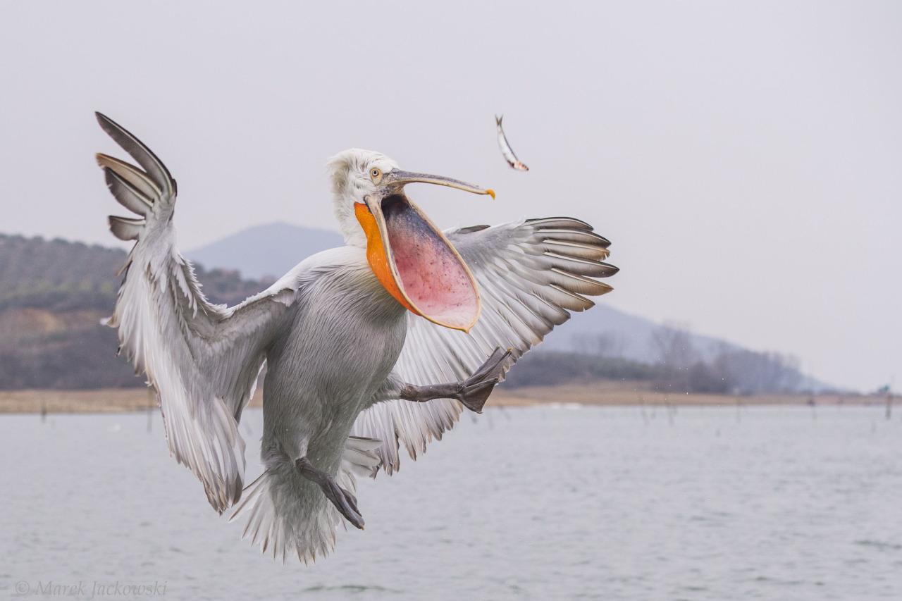 Красота диких птиц в работах Марека Яцковский