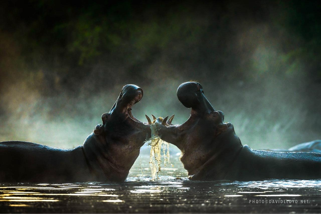 Неповторимая природа Африки глазами Дэвида Ллойда