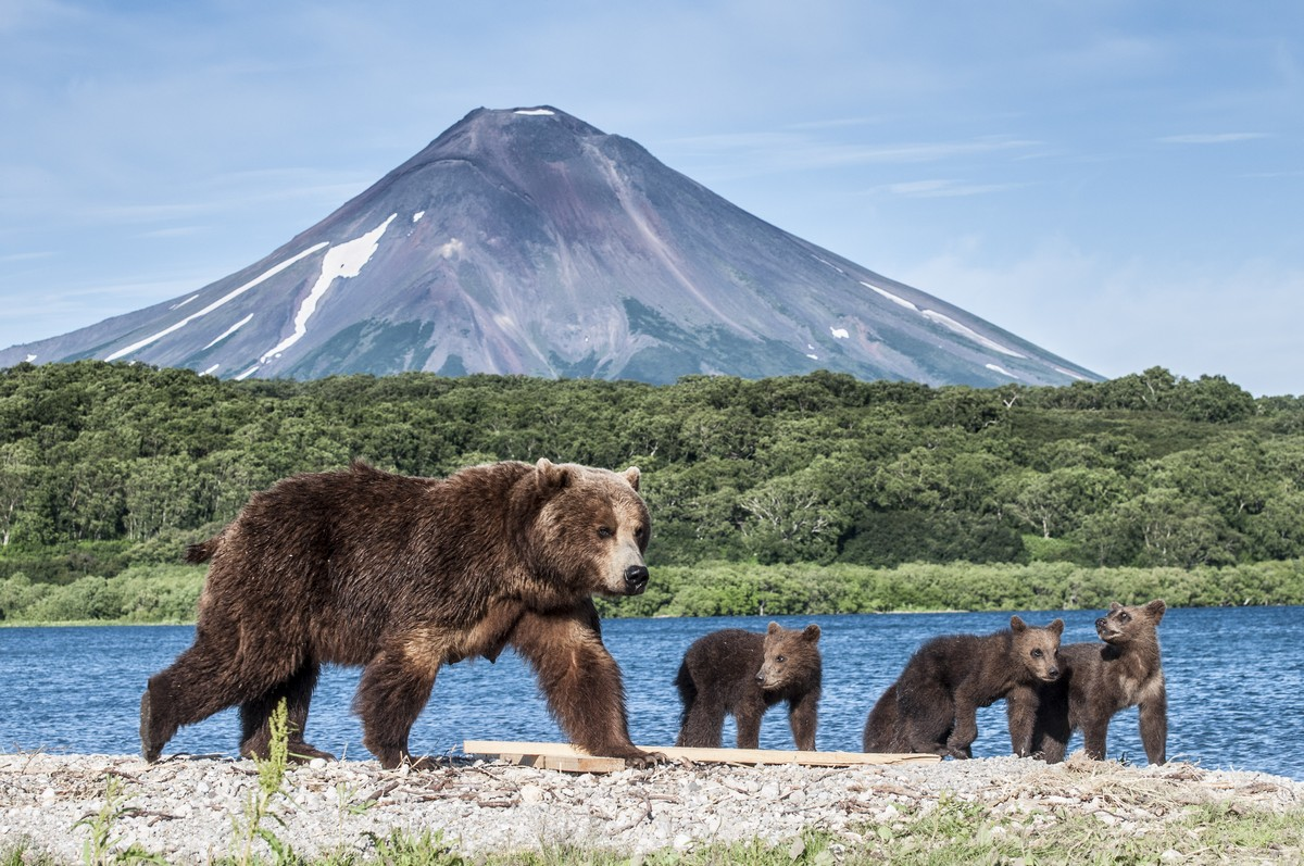 Дикая природа в красивых фотографиях Виталия Филючкова