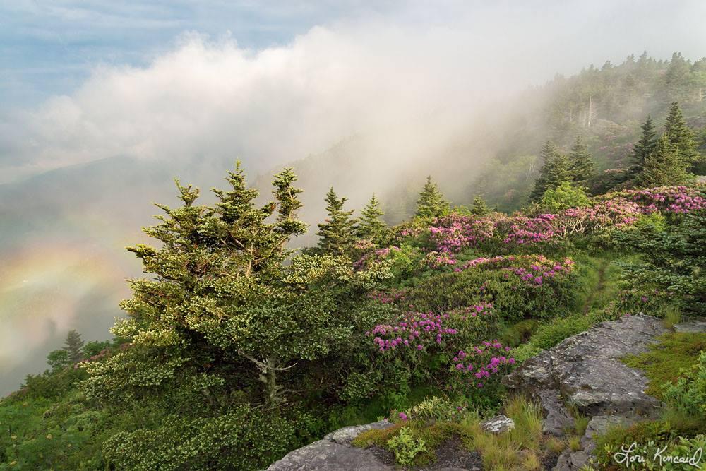 Любовь к природе отразимая в фотографиях