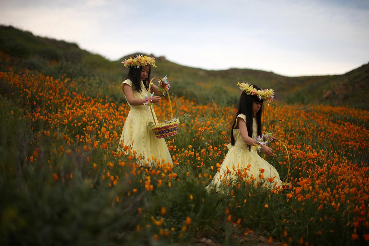 Цветущие поля Калифорнии