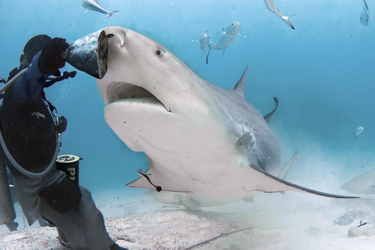 Экстремальная съемка акул на глубине