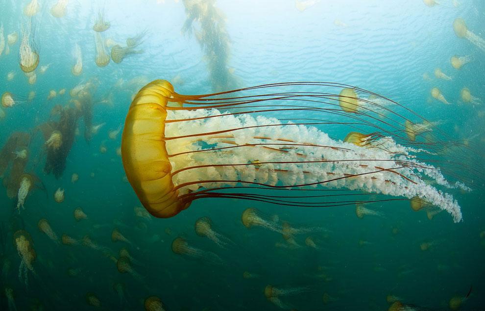 Медузы: инопланетные существа