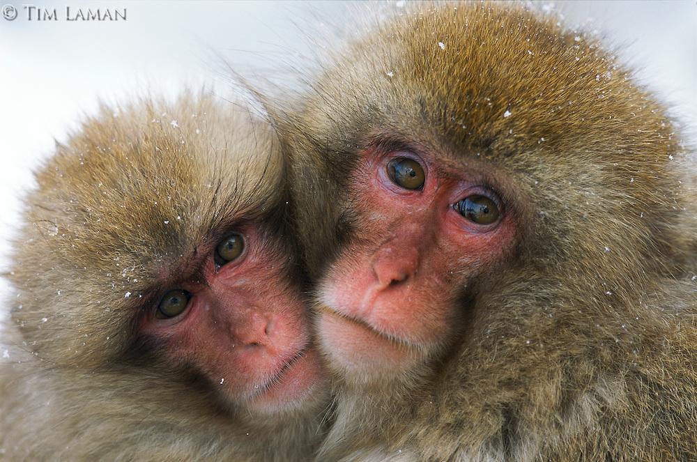 Фотографии дикой природы Тима Ламана
