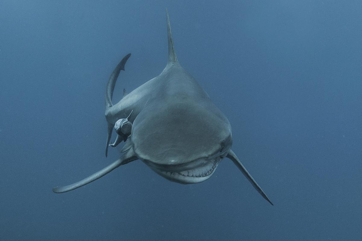 Джим — акула со сломанной челюстью