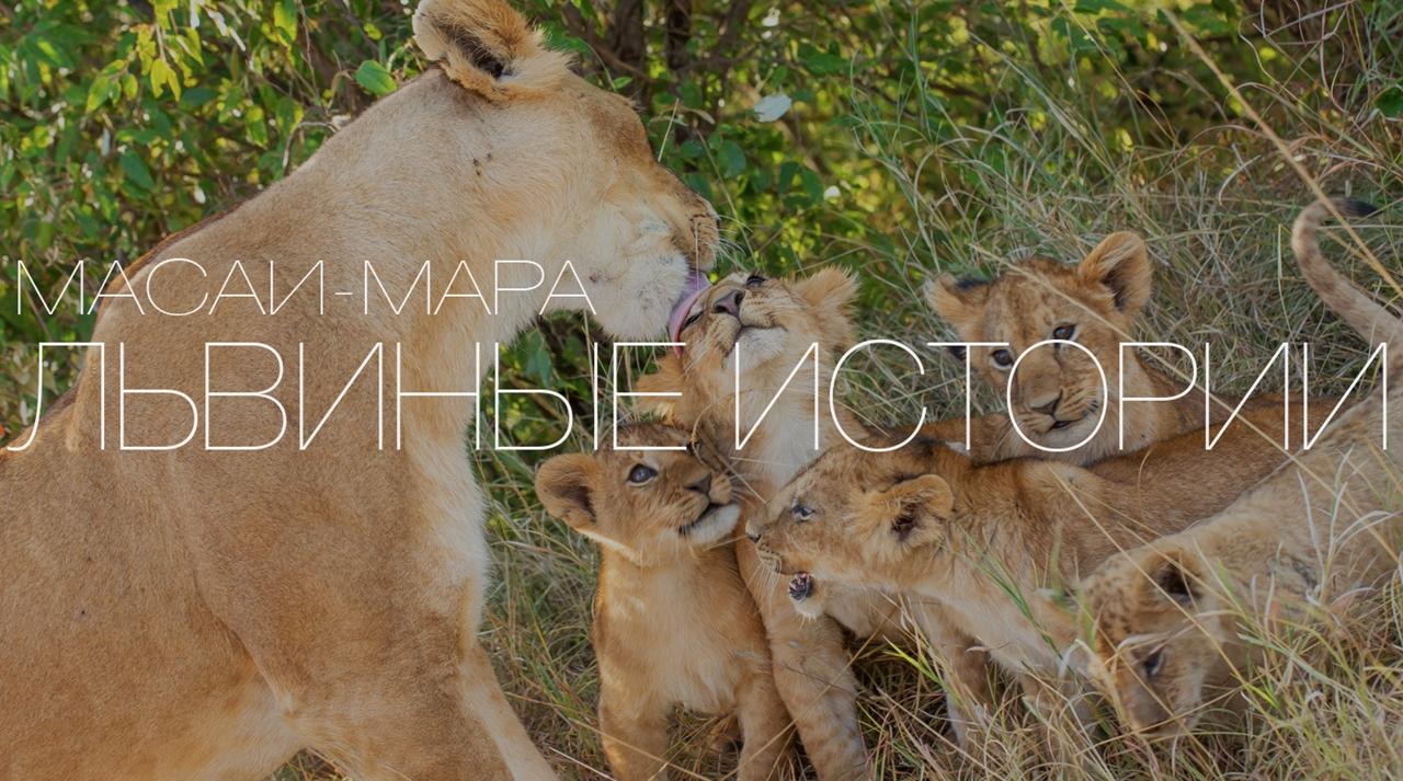Львиные истории. Со львятами от рассвета до заката…