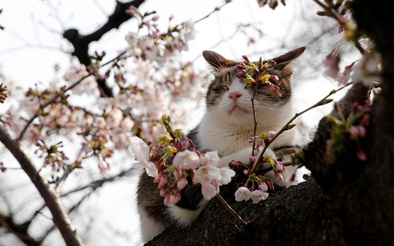 Картины Весны