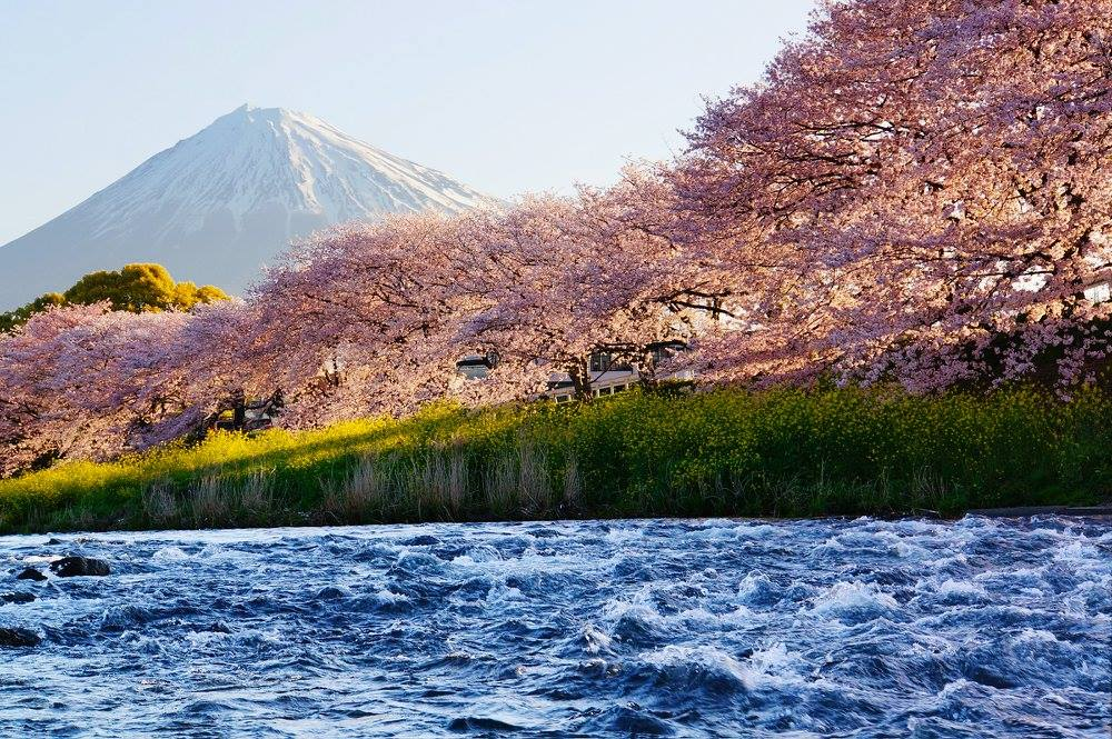 Весенняя красота Японии