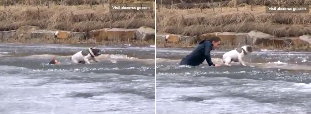 Парень бросился в ледяную воду чтобы спасти свою собаку