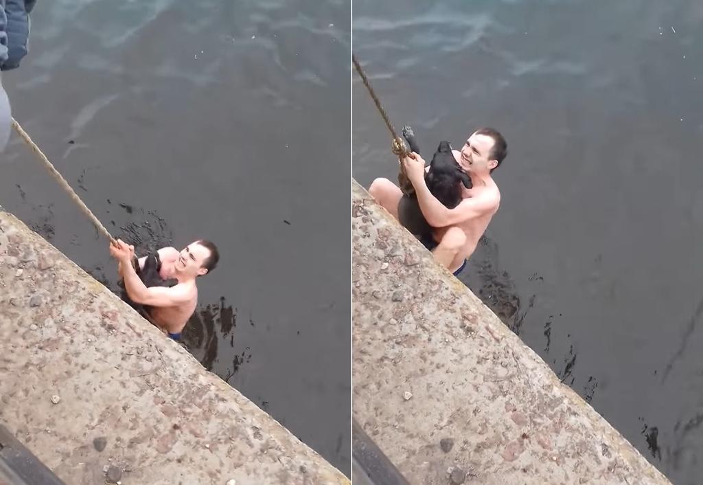 Для спасения бездомной собаки парень прыгнул в водохранилище