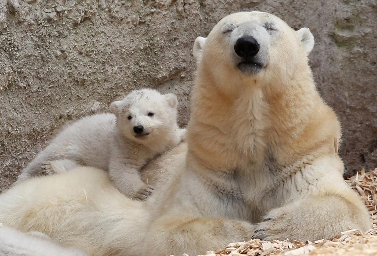 Детеныши разных животных и их мамы