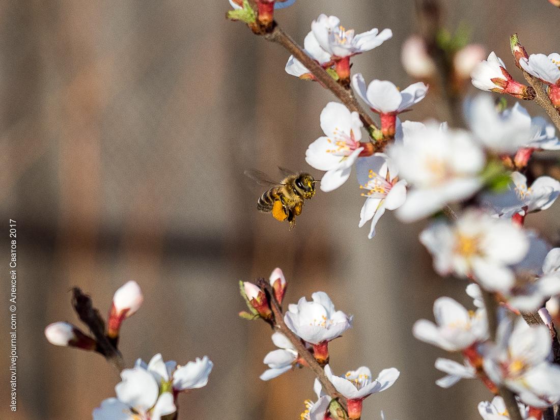 Пчелы и другие обитатели фазенды