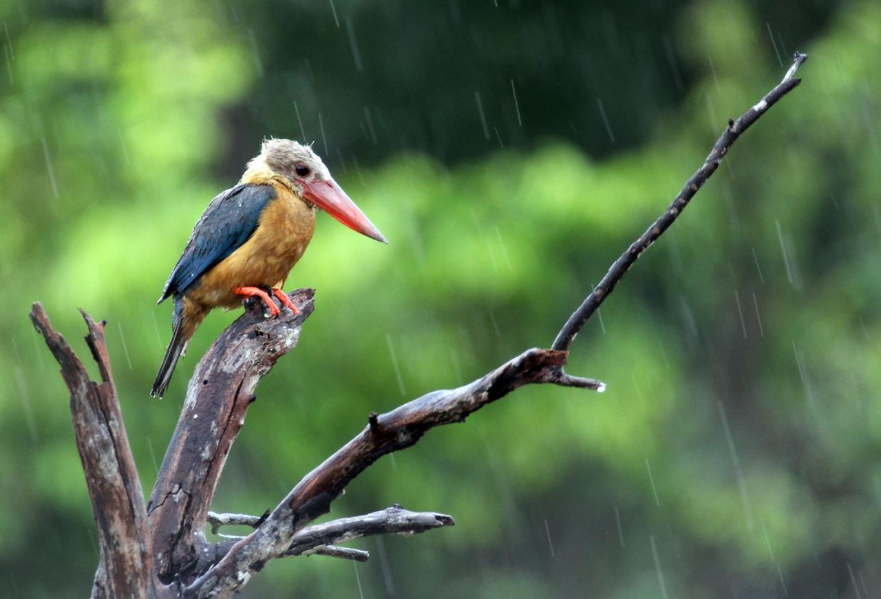 Птицы в фотографиях