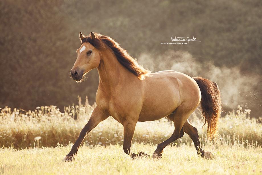 Завораживающие фотографии изящных и грациозных лошадей