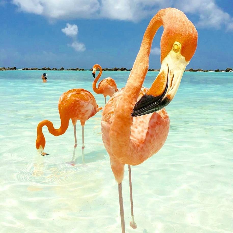 фламинго Фотографии PNG  Векторы и PSDфайлы  Бесплатная