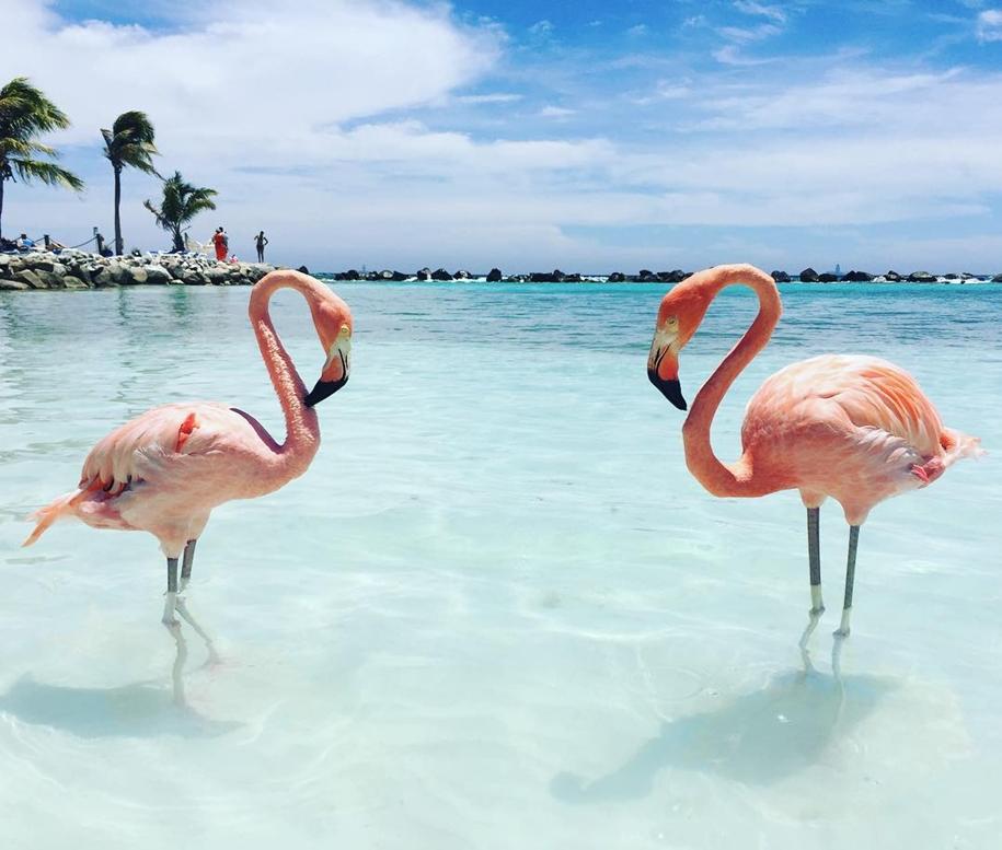 Фламинго фотографии