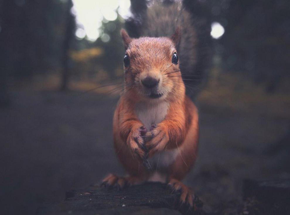 Фотопортреты лесных обитателей