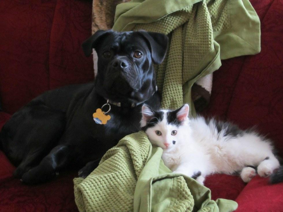 Щенок нашел брошенного в поле котенка и теперь они лучшие друзья