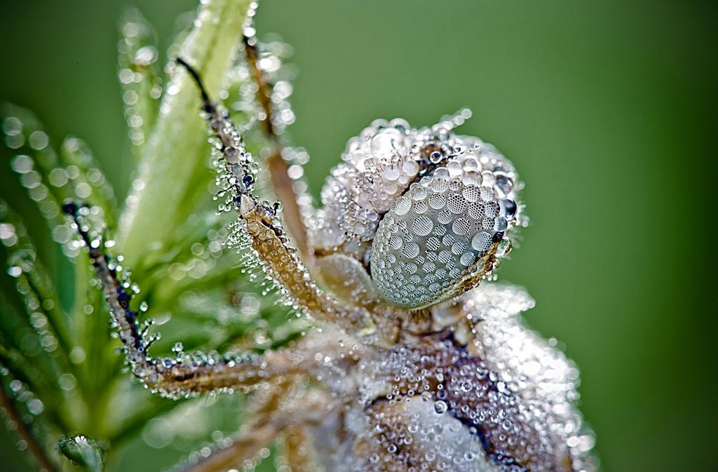 Потрясающее макро: стрекоза в капельках росы