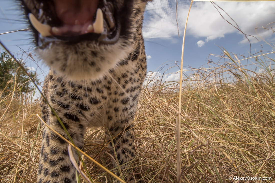 Приключения фотографа-натуралиста