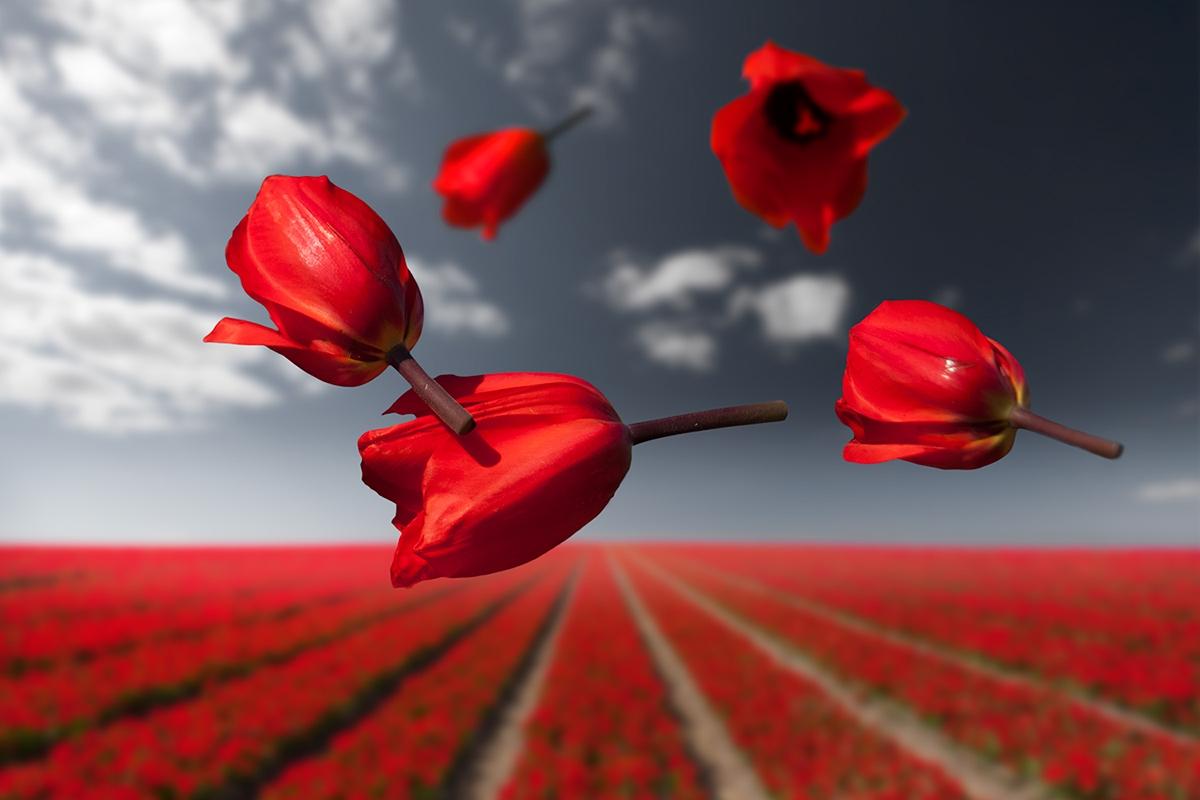 Цветы в гравитации: воздушный фотопроект Клэр Дропперт