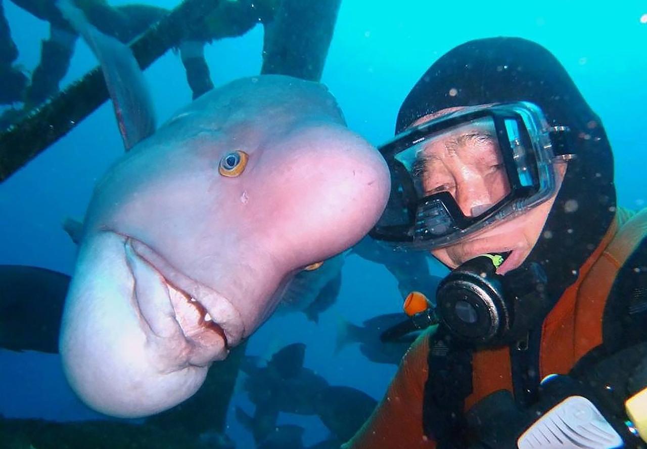 Необычный друг японского аквалангиста