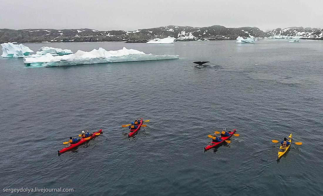 Плавание с гренландскими китами в Арктике
