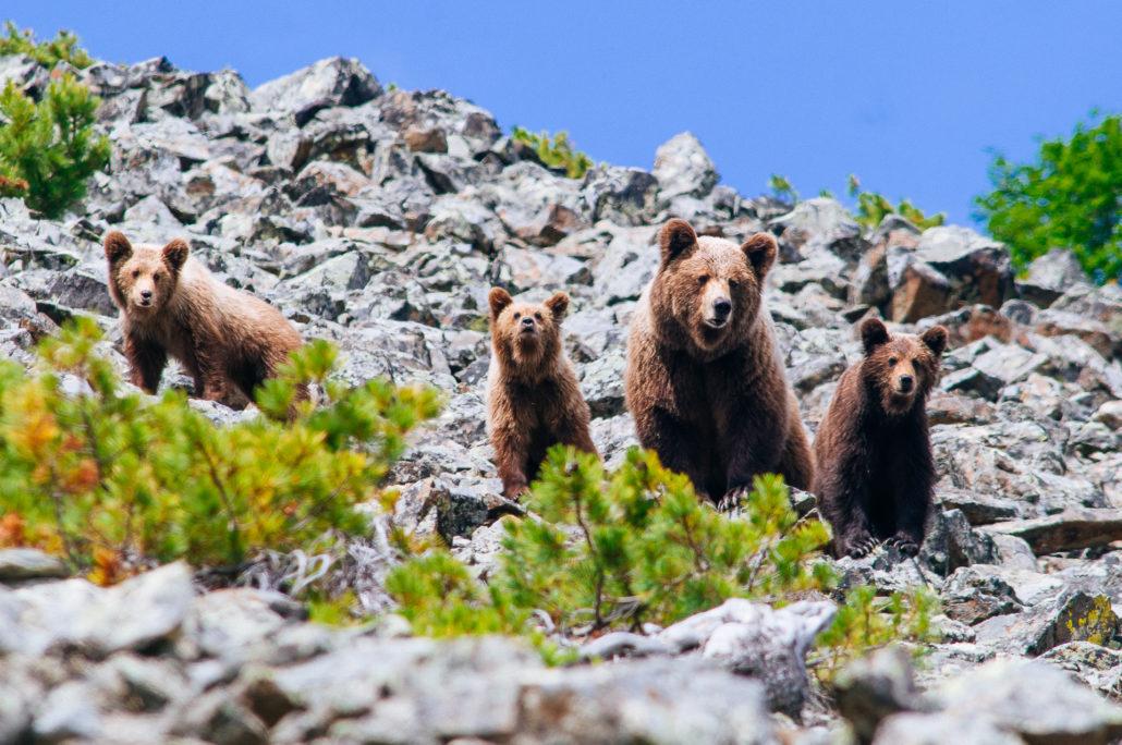 Животные дикой природы Магаданской области