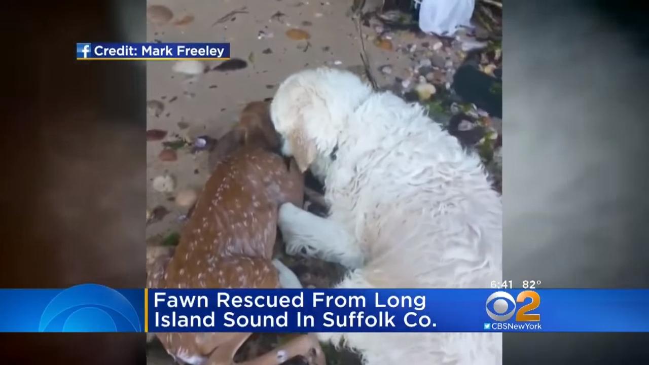 Собака спасла тонущего олененка