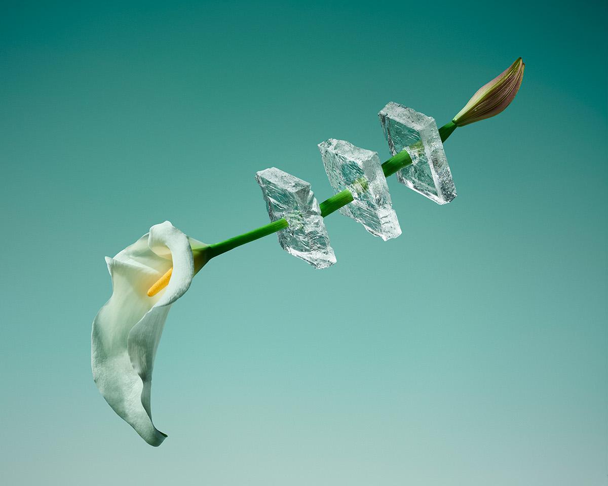 Цветы и лед в фотопроекте Паломы Ринкон