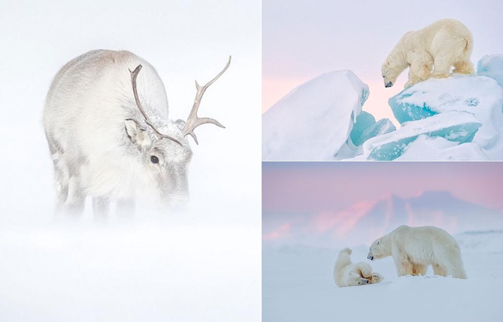 «Призраки Арктики»: медведи, олени и потрясающие пейзажи полярного архипелага