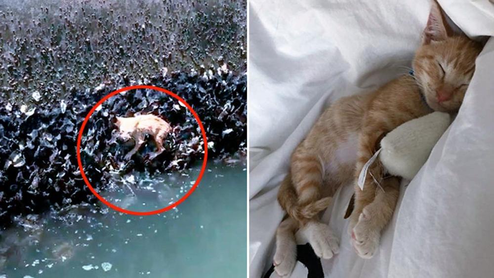 В США спасли котенка, который из последних сил цеплялся за жизнь