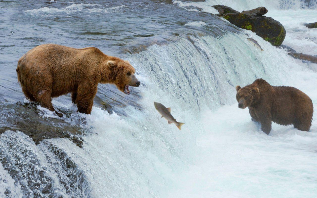 Дикие животные Аляски — онлайн