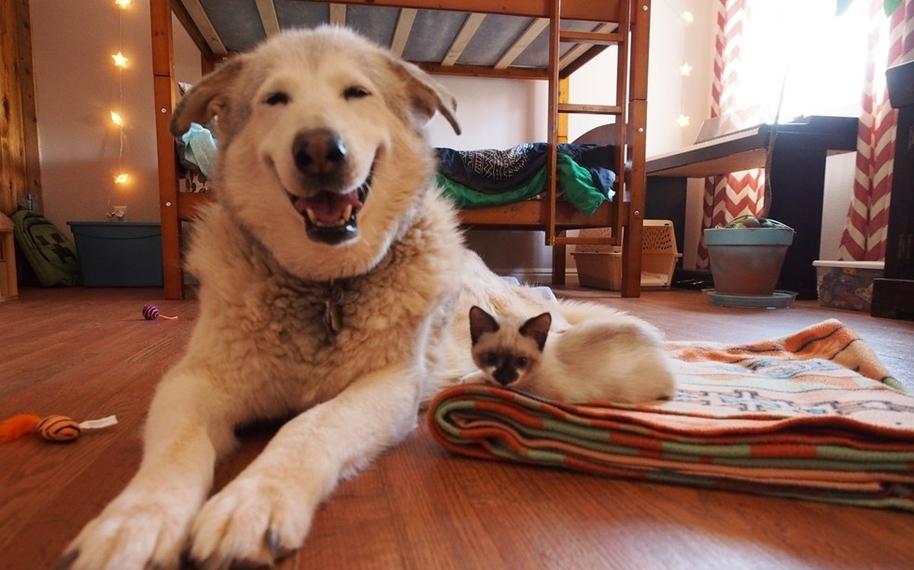 Четыре котенка взятых из приюта, сделали большую собаку снова счастливой