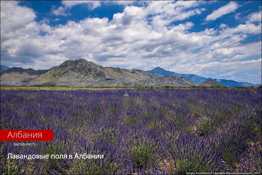 Лавандовые поля… в Албании!