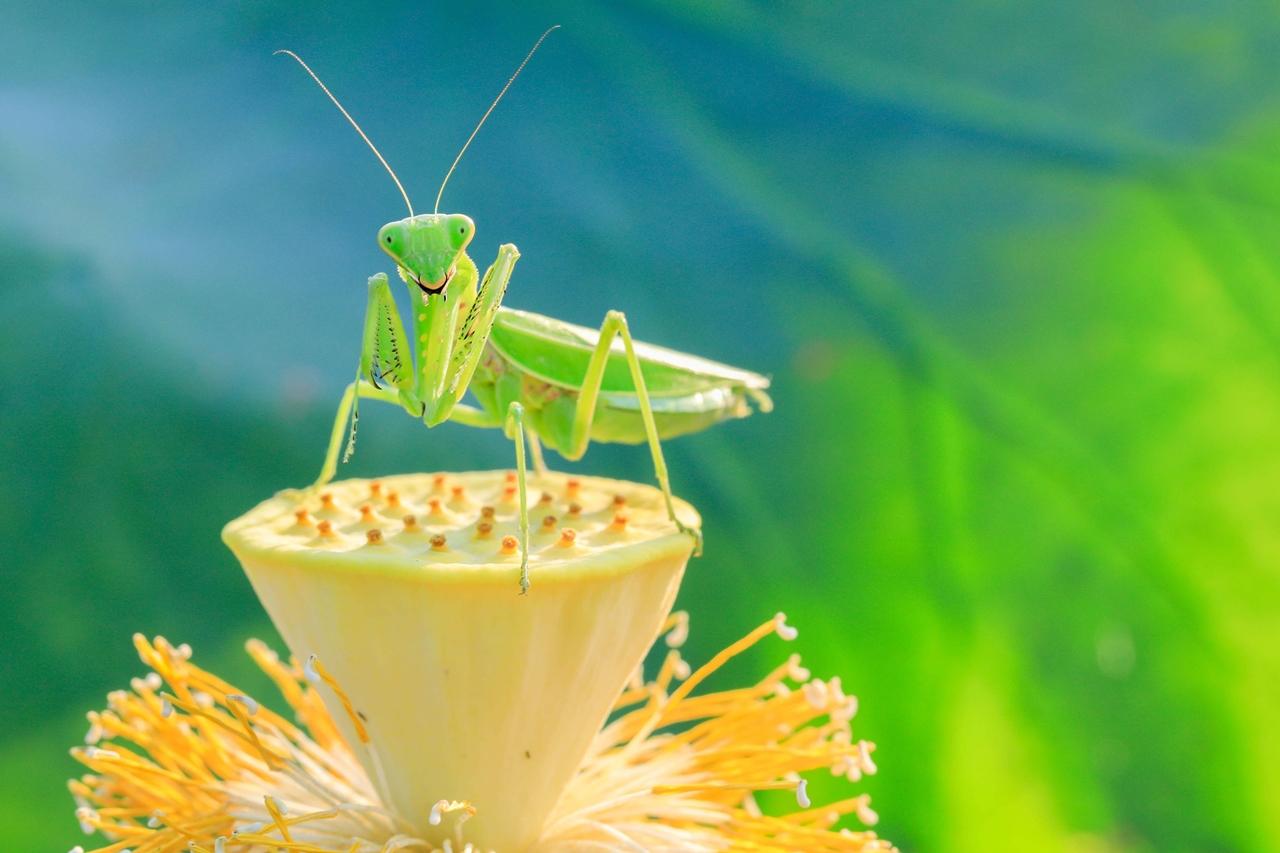 Жизнь на нашей планете немыслима без насекомых