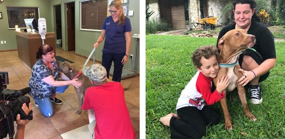В США двое храбрых питбулей спасли детей от ядовитой змеи