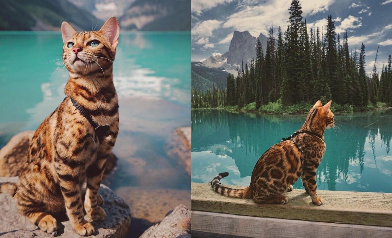 Красивый кот-путешественник на фоне потрясающих пейзажей