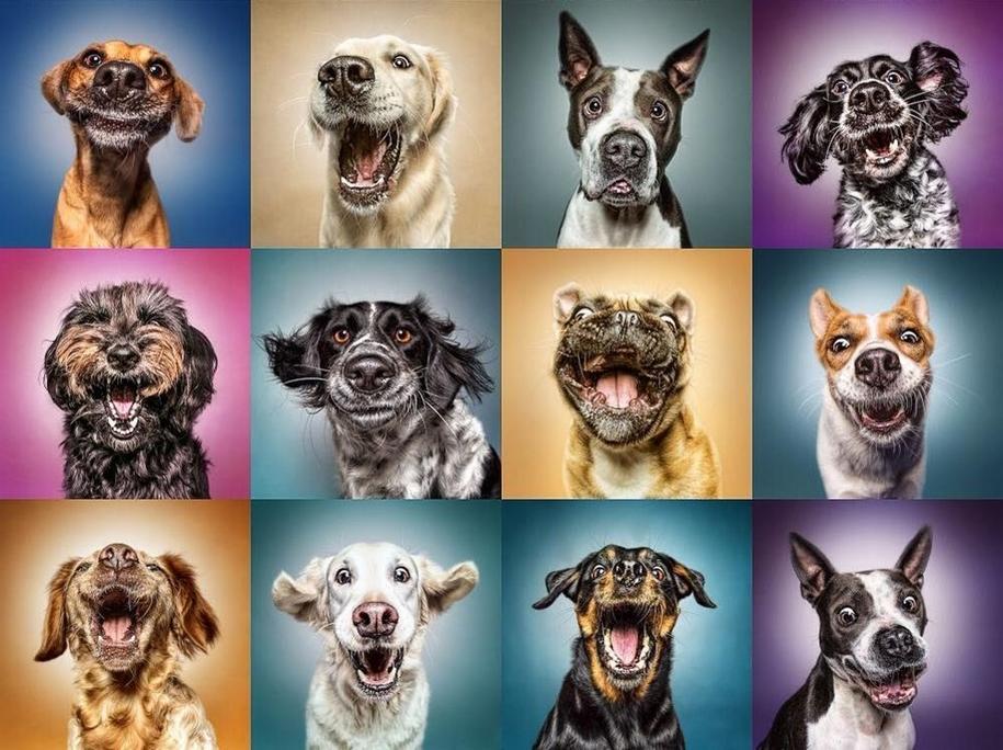 Прекрасные снимки животных Мануэлы Кульпа