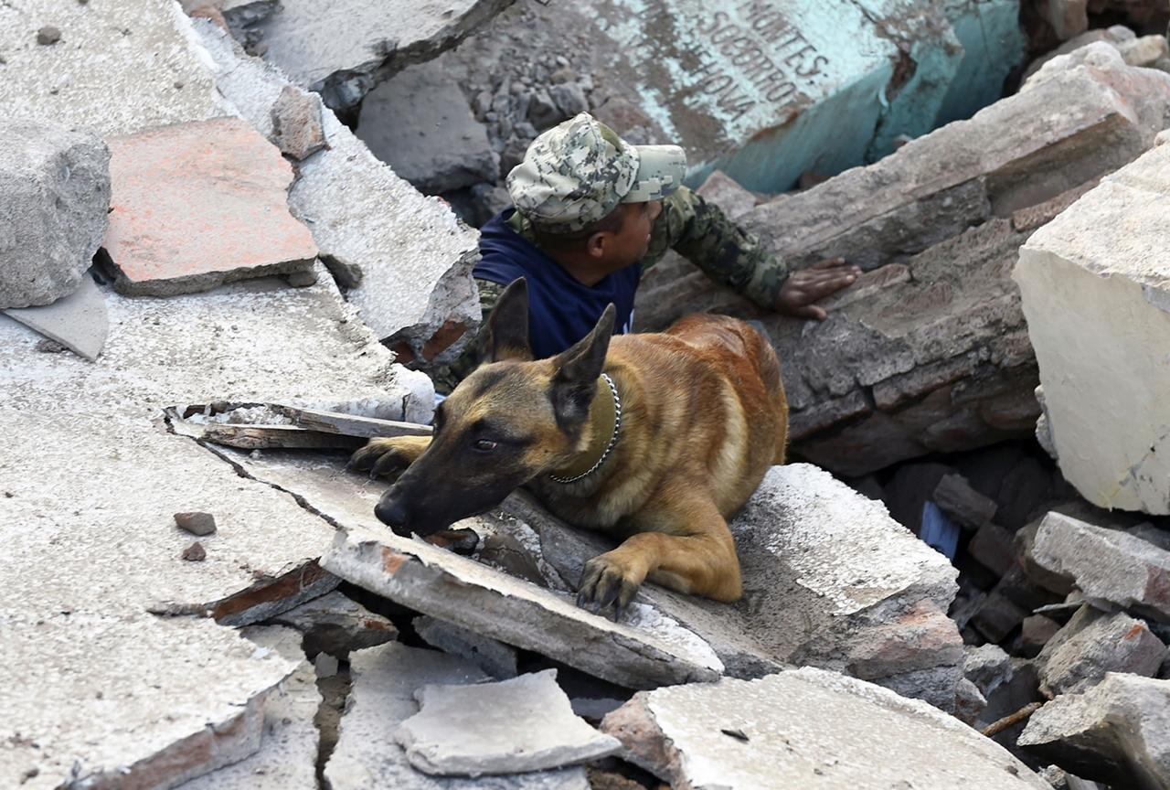Собачья работа: поиск людей под завалами