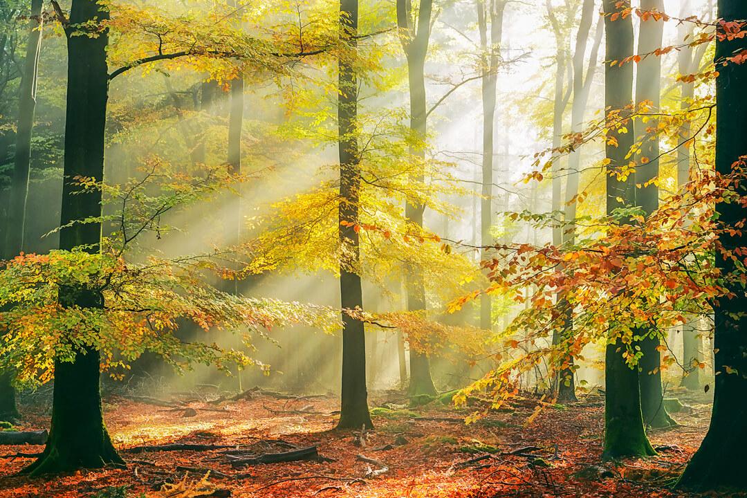 Волшебные пейзажи голландского фотографа Ларса Ван де Гура