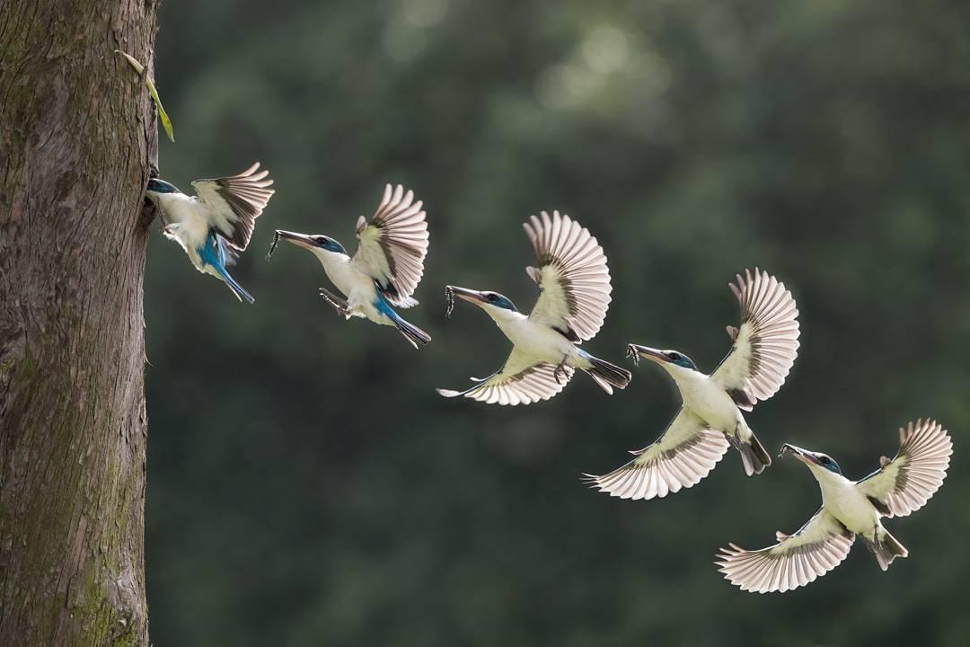 Великолепные фотографии птиц Джонсон Чуа