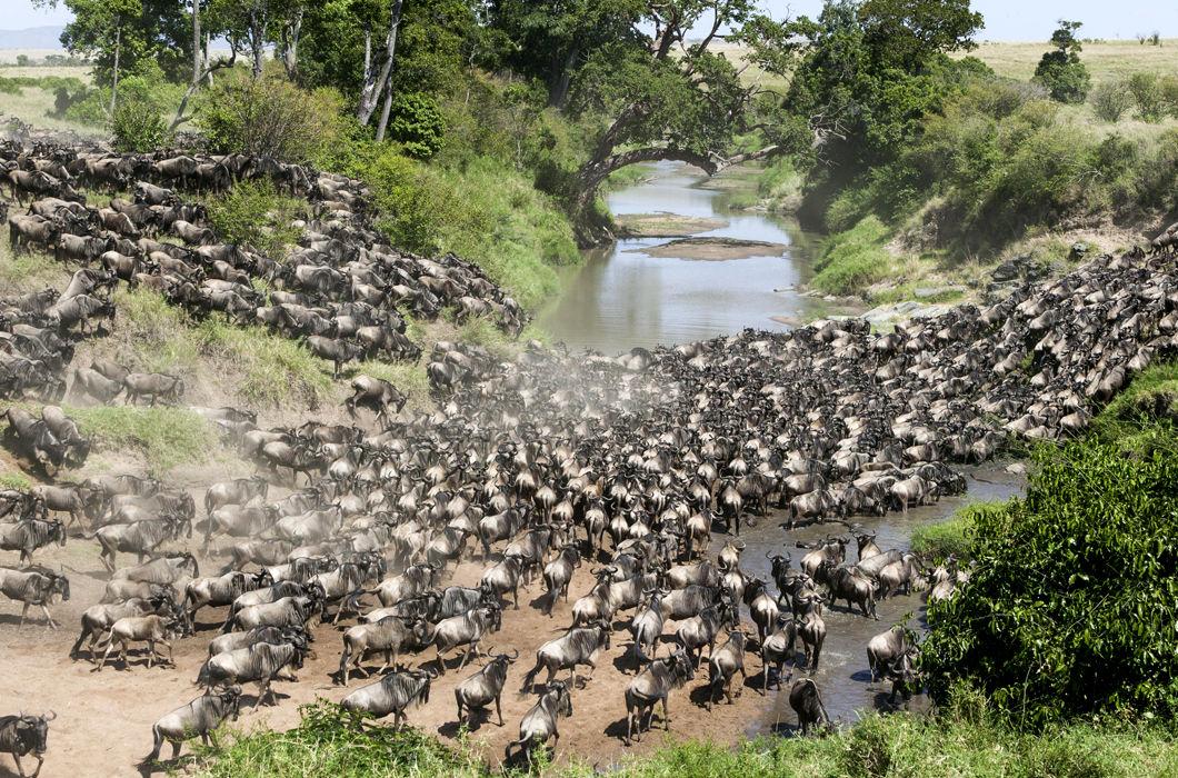 Миграции в мире животных