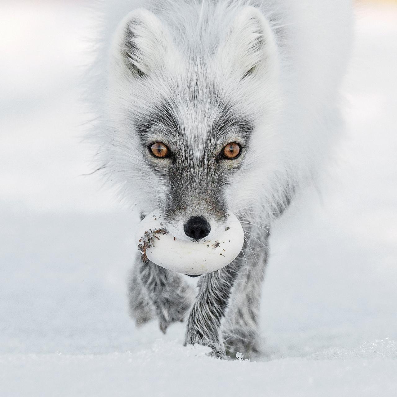 Конкурс фотографий дикой природы 2017