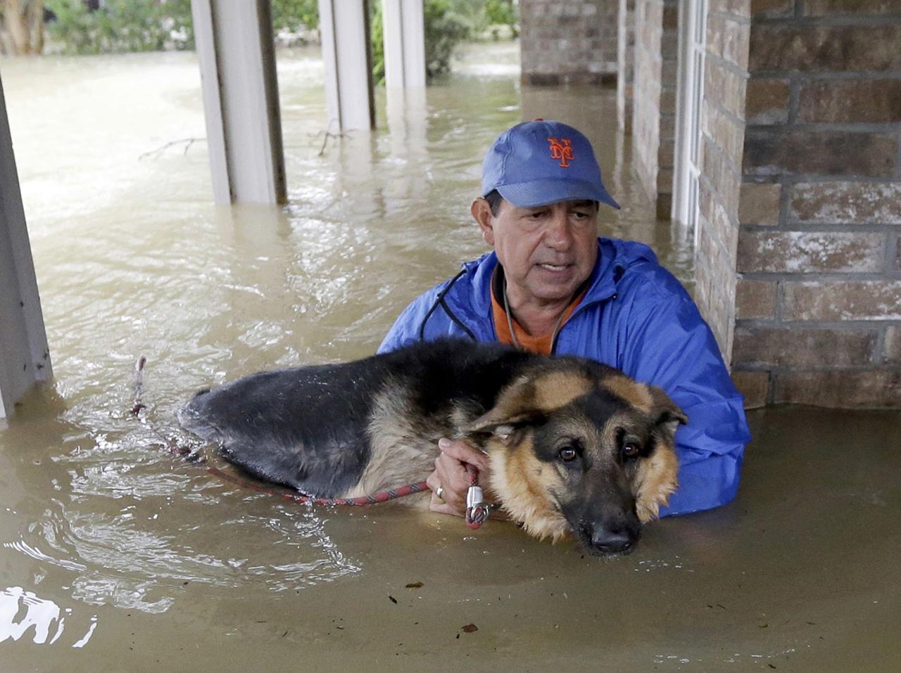 Спасение домашних питомцев от урагана «Харви»